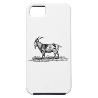 Vintage Domestic Goat Illustration - 1800's Goats iPhone 5 Covers