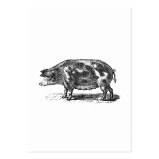 Vintage Domestic Hog Illustration - 1800's Pig Pack Of Chubby Business Cards