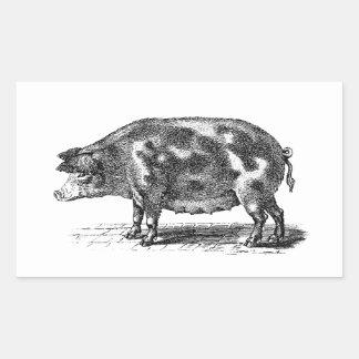 Vintage Domestic Hog Illustration - 1800's Pig Sticker