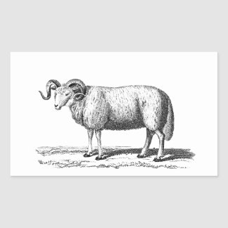 Vintage Domestic Sheep Illustration -1800's Ram Rectangle Stickers