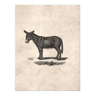 Vintage Donkey Illustration - 1800's Donkeys Art Photo
