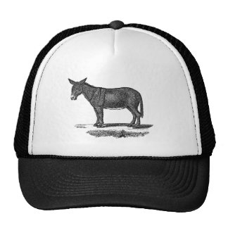 Vintage Donkey Illustration - 1800's Donkeys Hat
