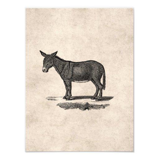 Vintage Donkey Illustration -1800's Donkeys Photograph