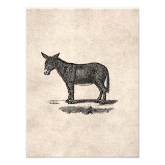 Vintage Donkey Illustration -1800's Donkeys Photo Print