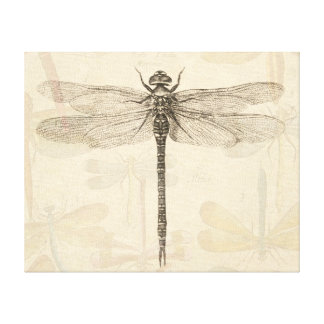 Vintage dragonfly drawing canvas print