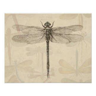 Vintage dragonfly drawing poster