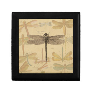Vintage dragonfly drawing small square gift box