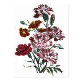 Vintage Drawing: Flemish Pink Flowers Postcard