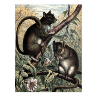 Vintage Drawing: The Dormouse Postcard