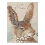 Vintage Easter Bunny Rabbit Postcards