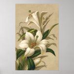 Vintage Easter Lilies, Victorian Flowers in Bloom Poster