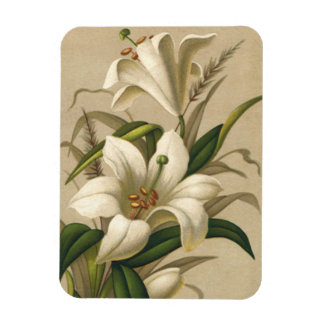 Vintage Easter Lilies, Victorian Flowers in Bloom Rectangular Photo Magnet