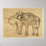 Vintage Elephant and Human Skeleton Illustration Poster