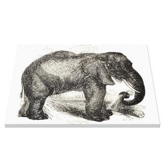Vintage Elephant Illustration (1891) Canvas Print