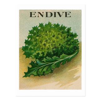 vintage endive seed packet postcard
