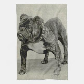 Vintage English Bulldog Photograph Tea Towel