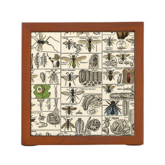 Vintage Entomology Desk Organiser