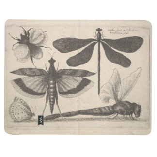 Vintage Entomology Dragonfly Field Notes Nature Journal