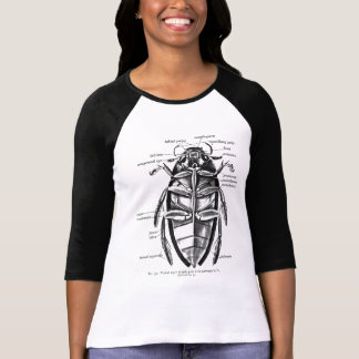 Vintage Entomology Hydrophilidae Scavenger Beetle T-Shirt