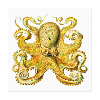 Vintage Ernst Haeckel Octopus in Yellow Stretched Canvas Prints