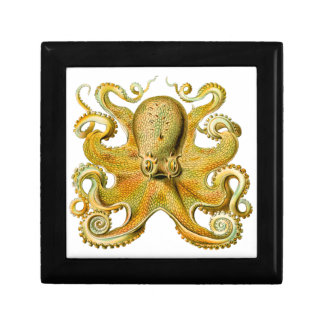 Vintage Ernst Haeckel Octopus in Yellow Gift Box