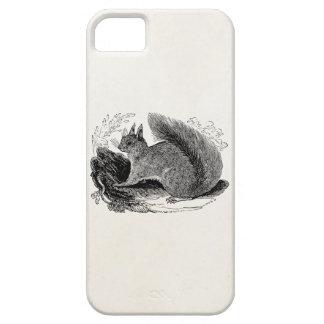 Vintage European Squirrel 1800s Squirrels iPhone 5 Cover