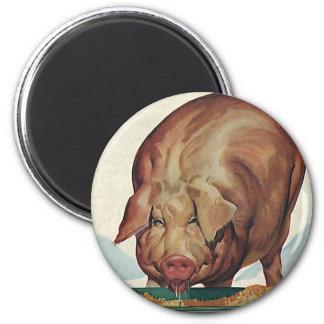 Vintage Farm Animals, Pig Eating Slop at a Trough 6 Cm Round Magnet