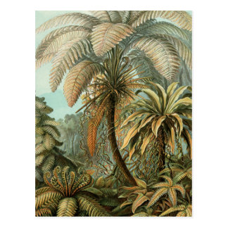 Vintage Ferns and Palm Tree Botanical Postcard