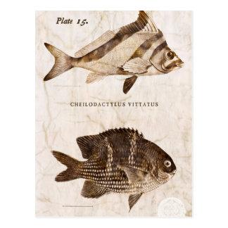 Vintage Fish Antique Marine Retro Sealife  Ocean Postcard