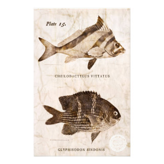 Vintage Fish Antique Marine Retro Sealife  Ocean Stationery