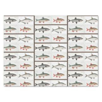 Vintage Fish Illustrations Tissue Paper