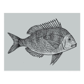 Vintage fish nautical marine art illustration postcard
