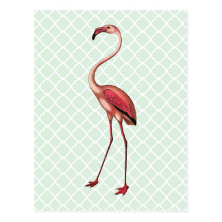 Vintage Flamingo on Mint Quatrefoil Postcard