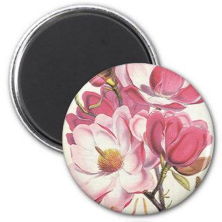Vintage Floral, Blooming Pink Magnolia Flowers Refrigerator Magnet