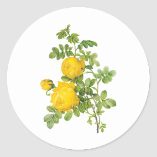 Vintage Floral Flowers, Yellow Roses by Redoute Classic Round Sticker