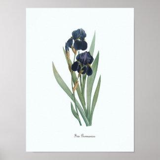 Vintage Floral Illustration Botanical Art Print
