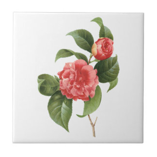 Vintage Floral, Pink Camellia Flowers by Redoute Tile