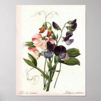 Vintage Floral Print Poster