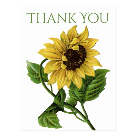 Vintage Floral Thank You Yellow Sunflower Flowers Postcard