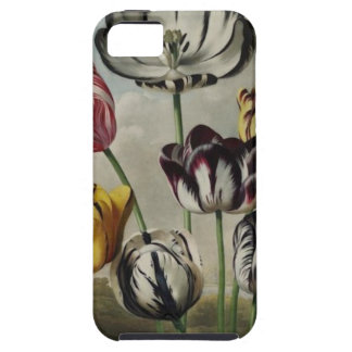Vintage Floral Tulip Painting iPhone 5 Case