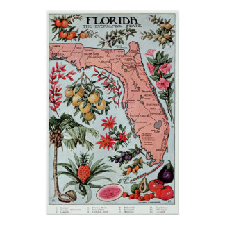 Vintage Florida Everglade State Fruit and Flowers Poster