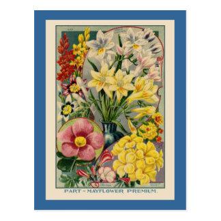 Vintage Flower Seed Catalog Post Cards