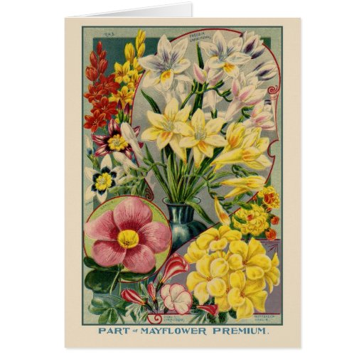 Vintage Flower Seed Catalogue
