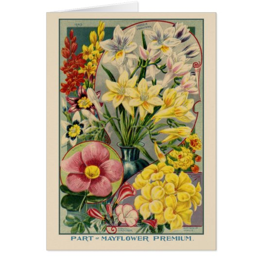Vintage Flower Seed Catalogue Greeting Card