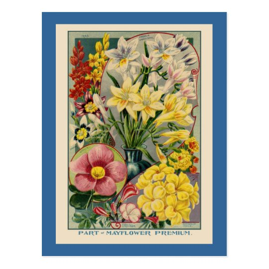 Vintage Flower Seed Catalogue Postcard