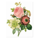 Vintage Flowers, Anemone Roses Clematis by Redoute Postcard