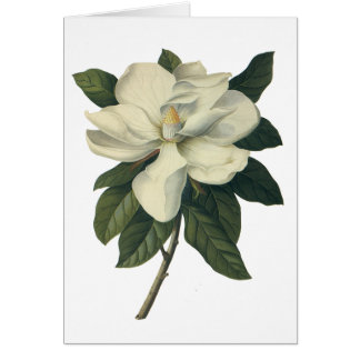 Vintage Flowers, Blooming White Magnolia Blossom Stationery Note Card
