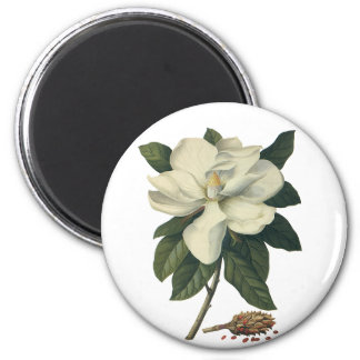 Vintage Flowers, Blooming White Magnolia Blossom 6 Cm Round Magnet