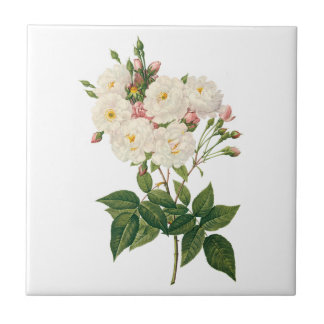 Vintage Flowers Floral Blush Noisette Rose Redoute Tile