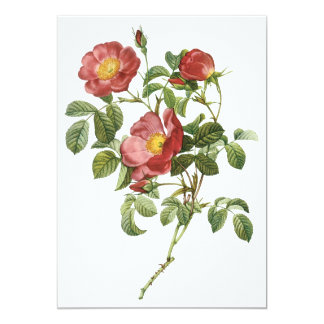 Vintage Flowers Floral Red Rose of Love by Redoute 13 Cm X 18 Cm Invitation Card